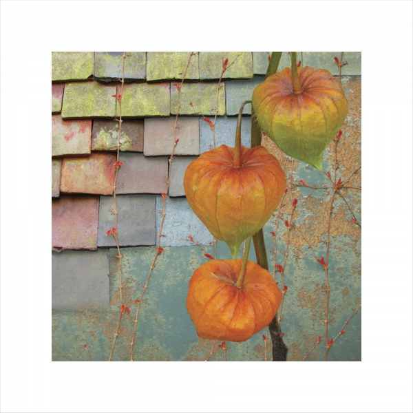 Claire Gill, Artist Claire Gill, Wallscape 13 Limited Edition Print, Limited edition print, wallscapes, buy art, collect art, digital photomontagee